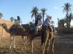 andrewses-in-camel-caravan